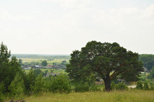 Дерево «Бонсай»