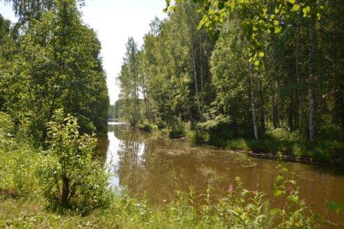Черноисточинский пруд с Ушковской канавой и окружающими лесами